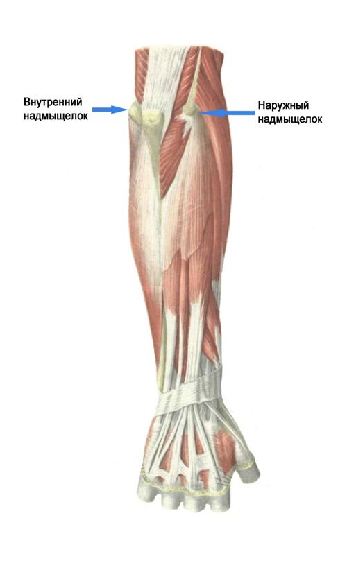 Надмыщелки плечевой кости