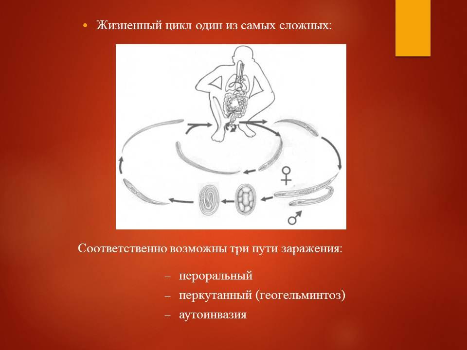 Гельминтозы тропиков_Слайд14