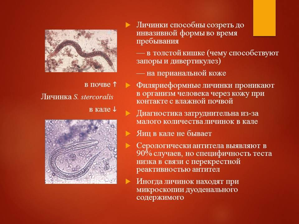 Гельминтозы тропиков_Слайд16