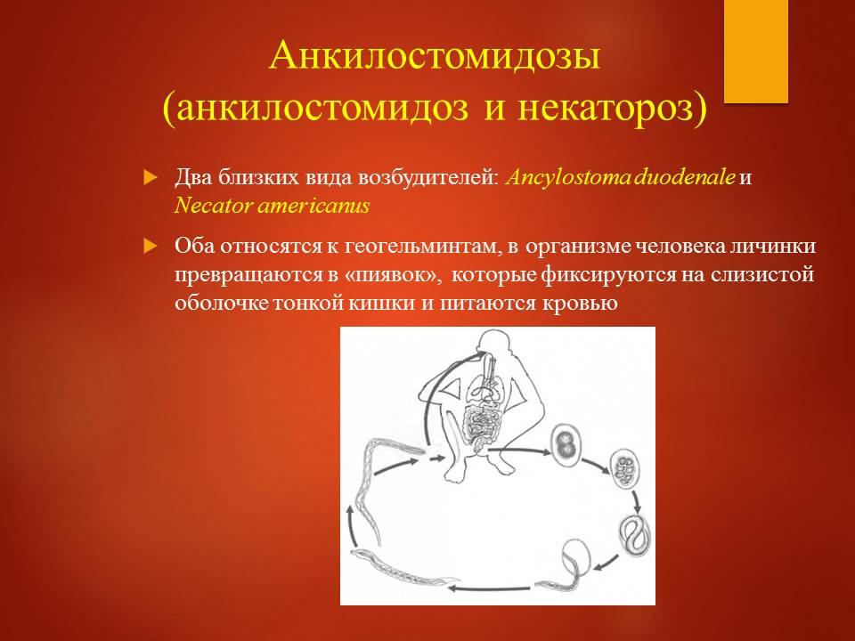 Гельминтозы тропиков_Слайд17