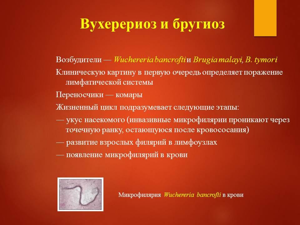 Гельминтозы тропиков_Слайд24