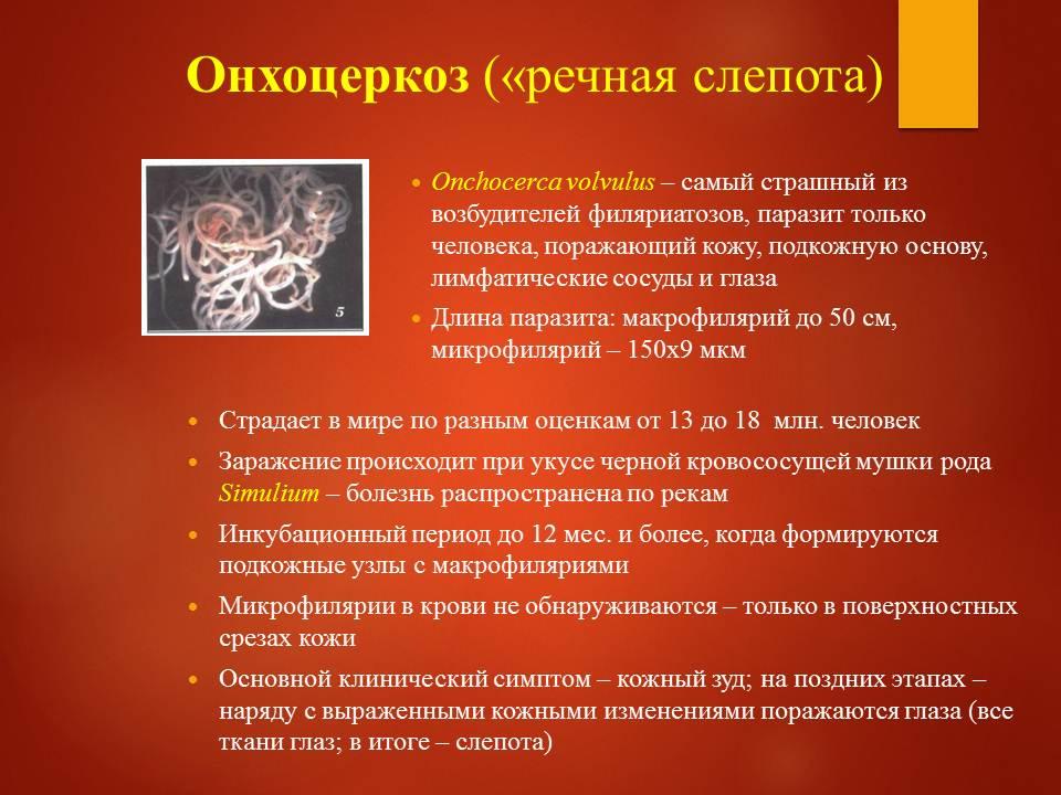 Гельминтозы тропиков_Слайд28